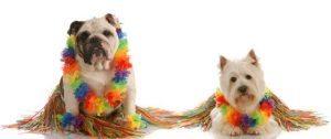 hawaii_dogs