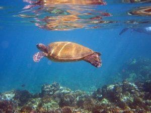 maui-the-valley-isle-of-hawaii-10