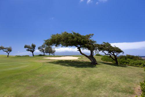 Wind blown trees on beautiful Maui oceanside golf course